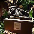 021 Fouquet's Chimpanzé allongé