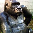 017 Fouquet's Gorille des montagnes