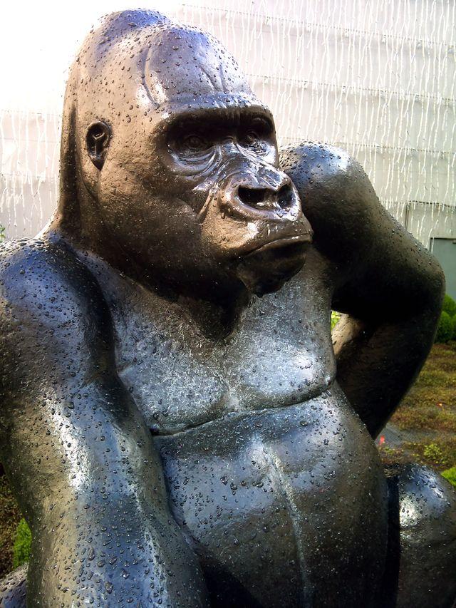 0051 Gorille des montagnes (détail)