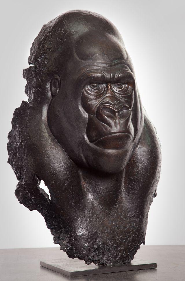 0031 Fragment de Gorille