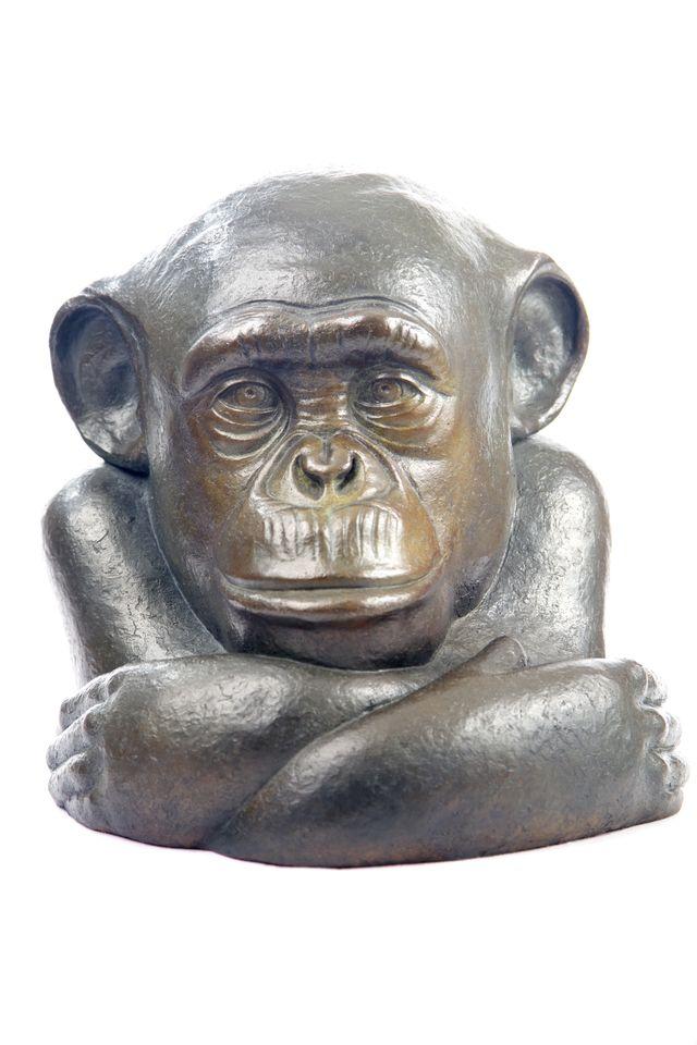 013 Portrait de Chimpanzé