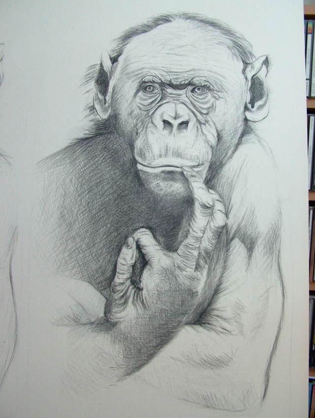 Bonobo pensif