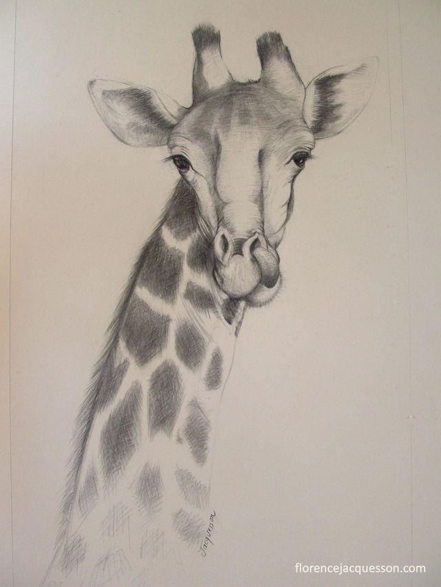 Girafe (fusain)